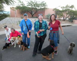 sd-dogs-on-walks